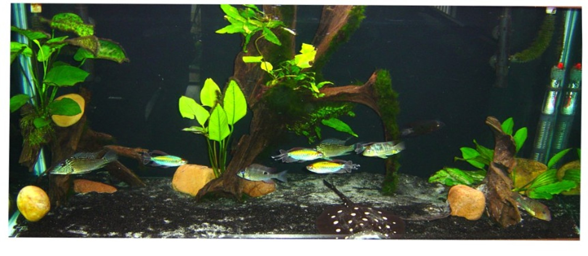 90 gallons freshwater fish tank (mostly fish and non-living decorations) - 90 gal amazon