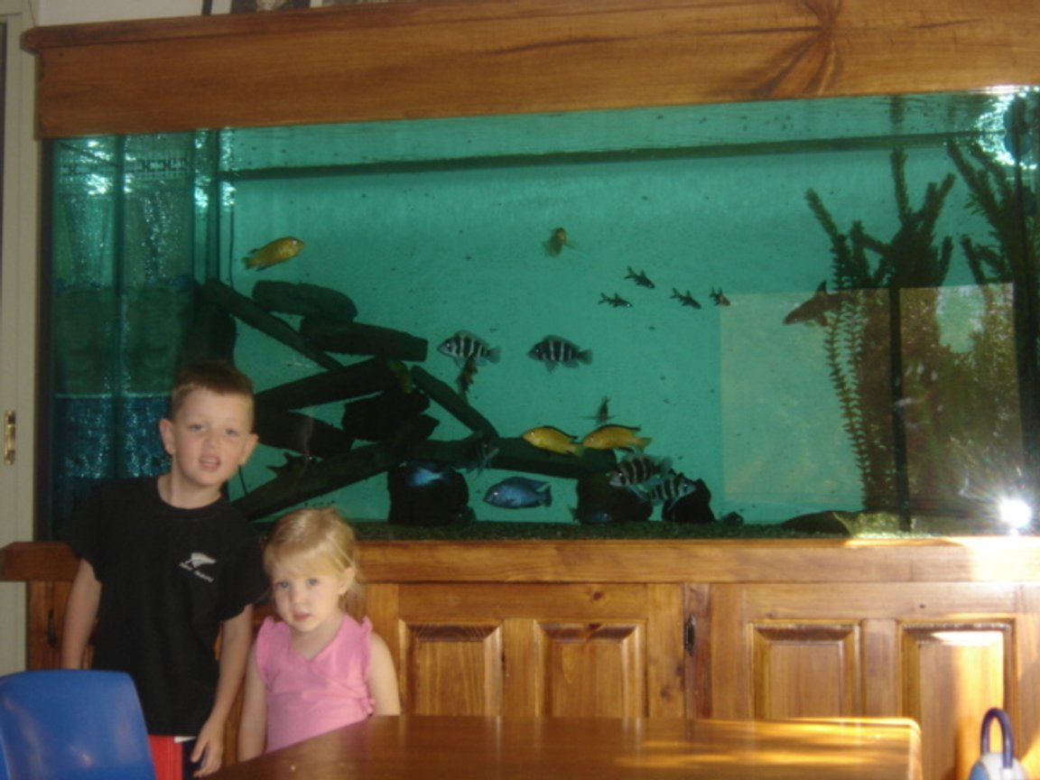 225 gallons freshwater fish tank (mostly fish and non-living decorations) - My Children in Front of my baby Aquarium.