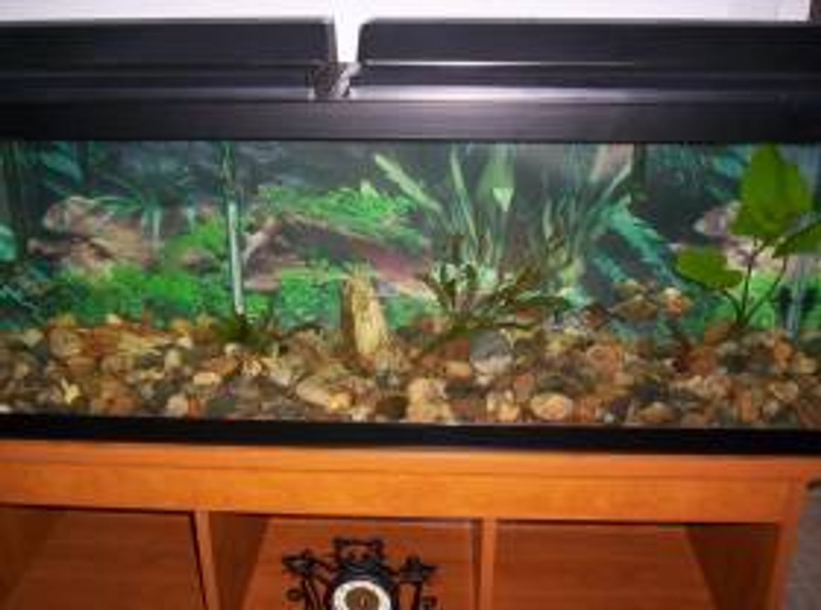 50 gallons freshwater fish tank (mostly fish and non-living decorations) - this is my tank