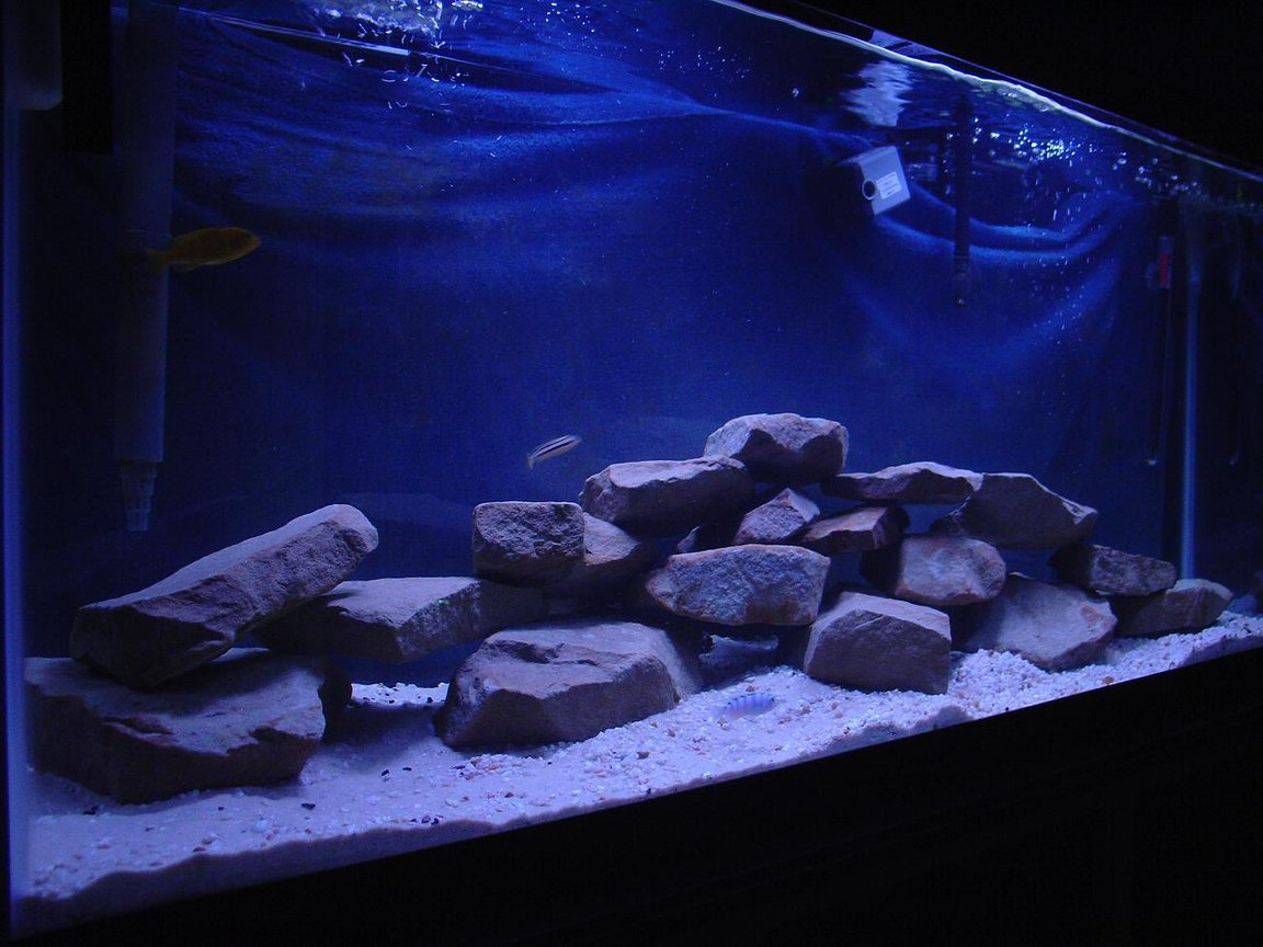 55 gallons freshwater fish tank (mostly fish and non-living decorations) - 55 gallon african cichlid tank