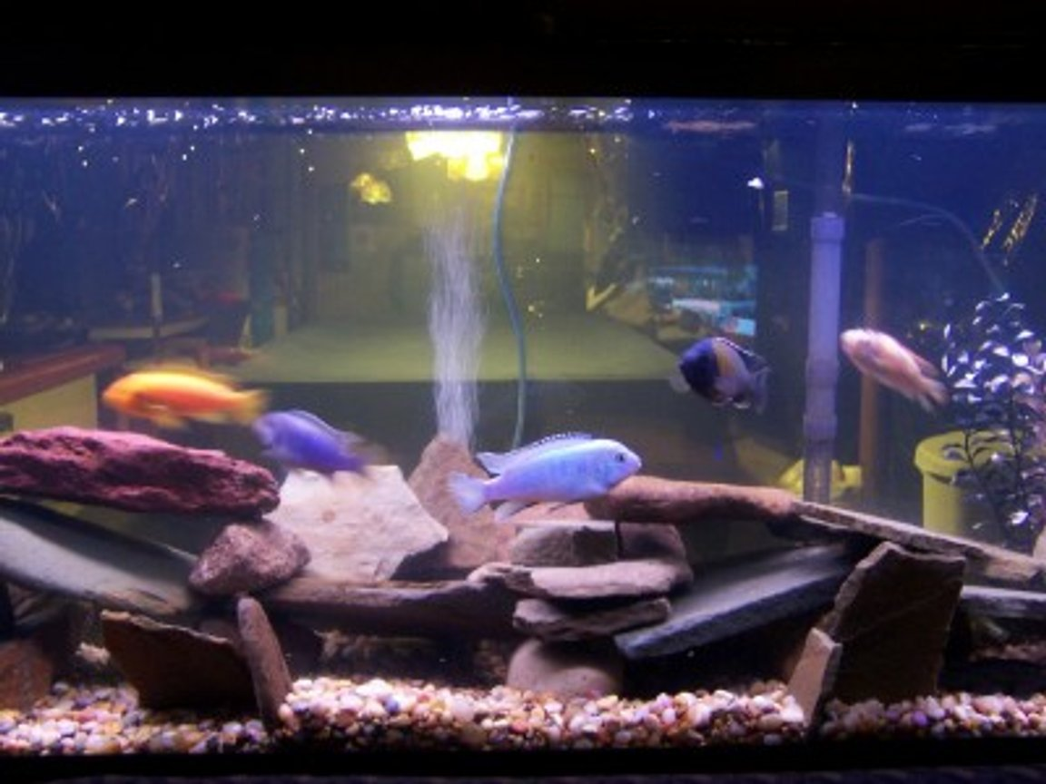 40 gallons freshwater fish tank (mostly fish and non-living decorations) - 55 Gallon African Cichlids. 8 African Cichlids, 1 snail, 1 pleco. Fake plants. Whisper 55. Rock picked for creeks in Pennsylvania.