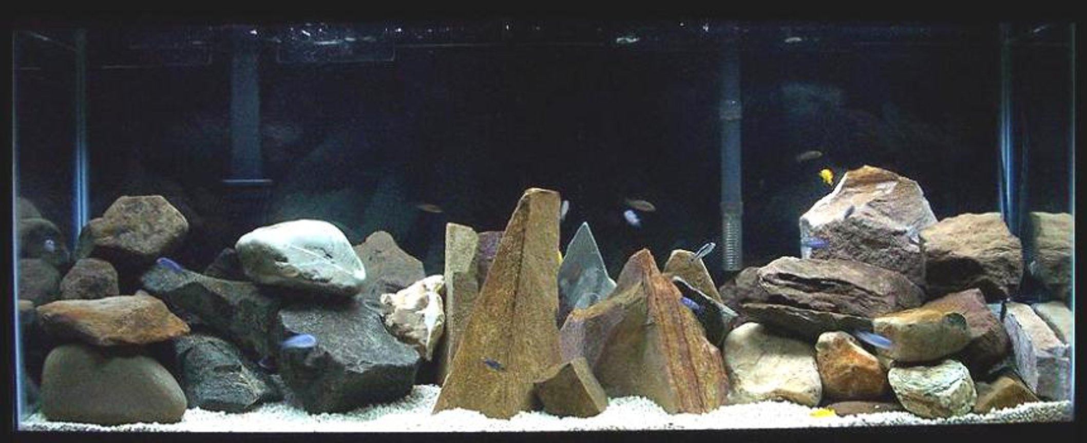 75 gallons freshwater fish tank (mostly fish and non-living decorations) - 55 gallon mbuna setup.