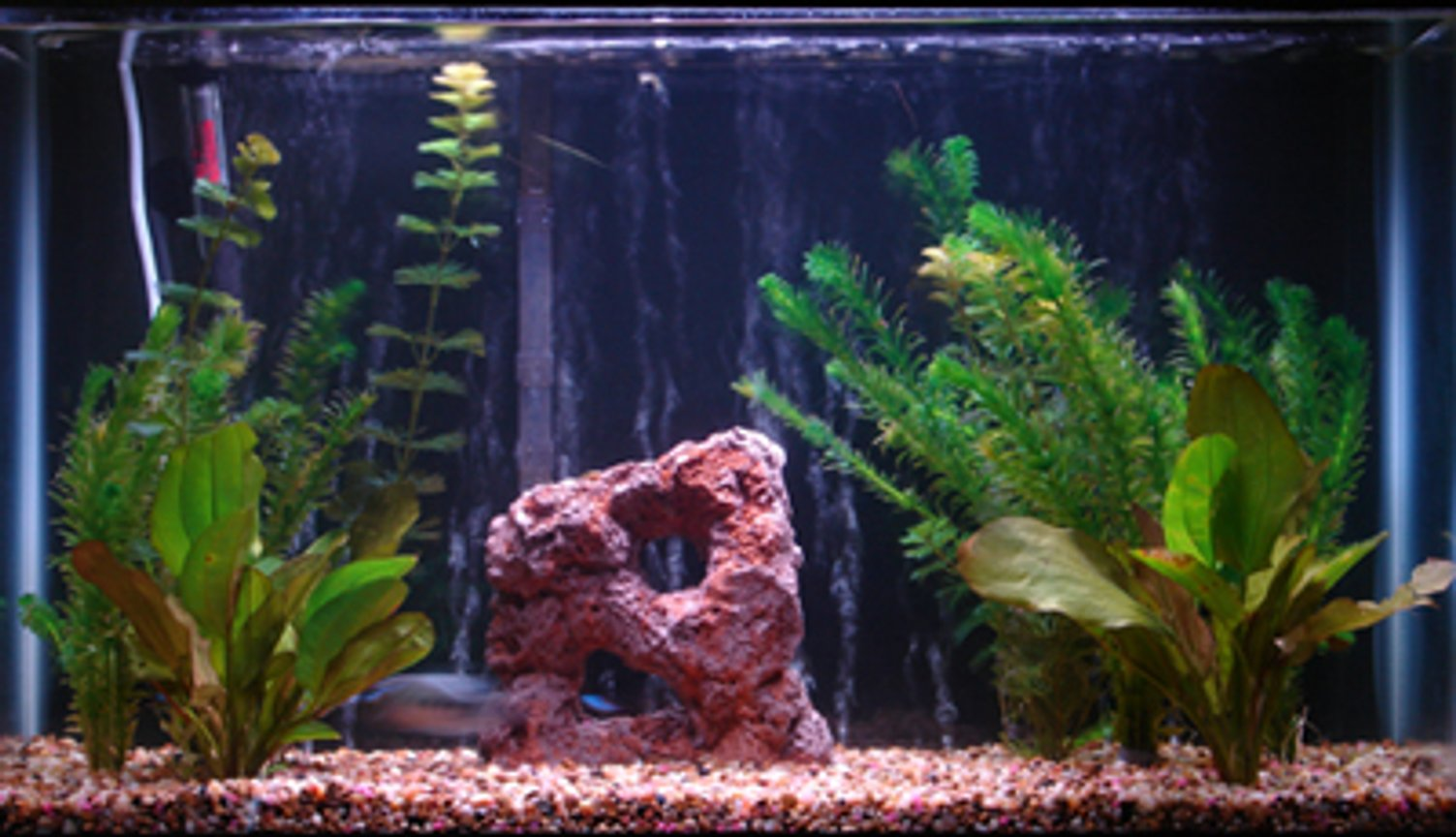 29 gallons freshwater fish tank (mostly fish and non-living decorations) - the tank