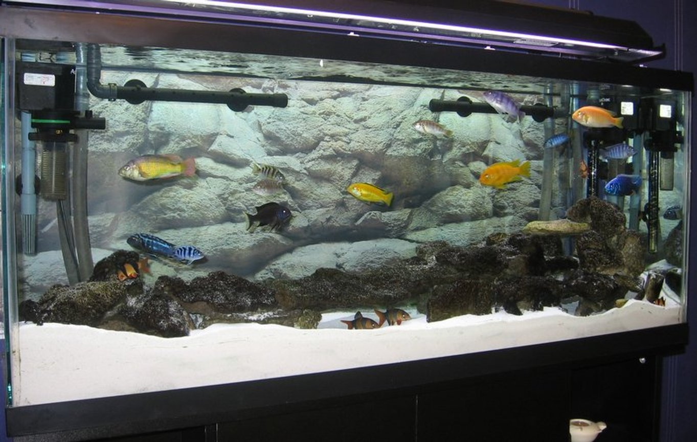 55 gallons freshwater fish tank (mostly fish and non-living decorations) - Lake Malawi Cichlids. 55 Gallon, 1 Filstar XP2 and 1 XP3 with 2 * Powerheads 400 gph to keep the surface of the sand clean of any waste. You can never have too much circulation.