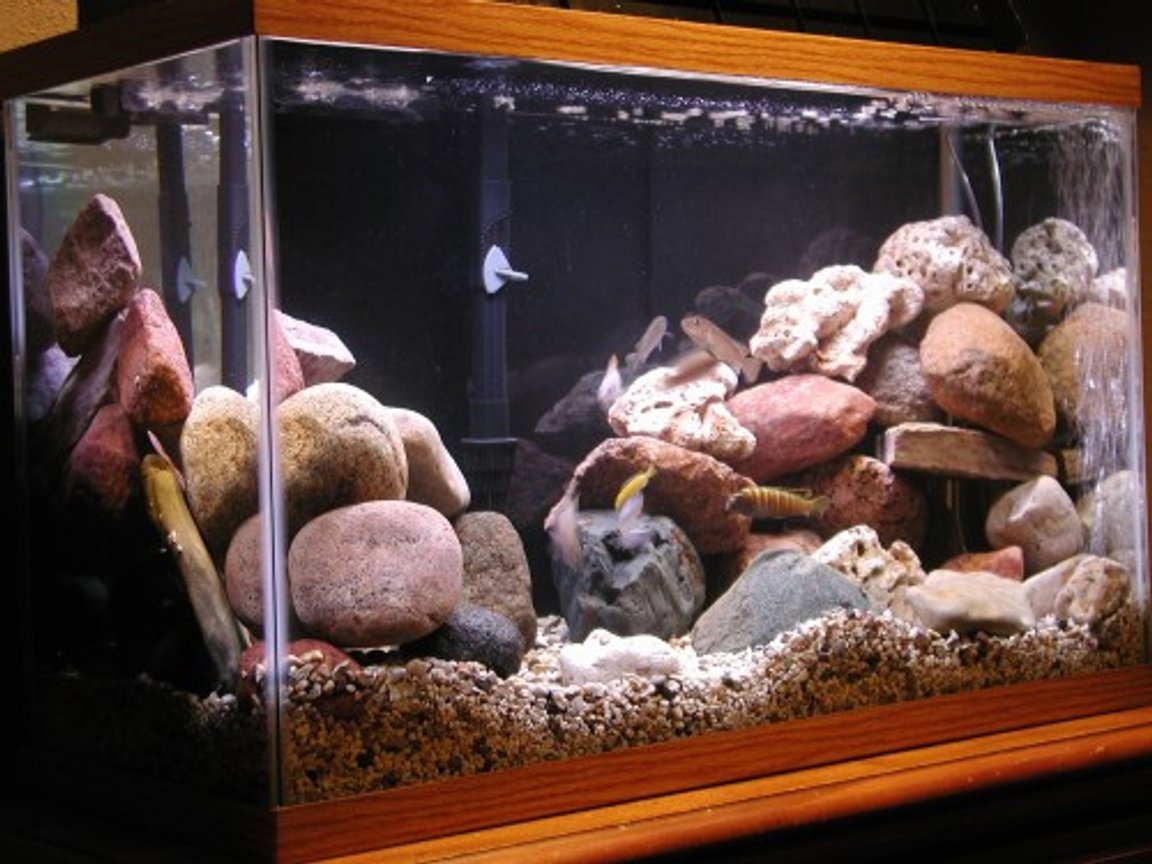 50 gallons freshwater fish tank (mostly fish and non-living decorations) - 29 gal. mbuna tank