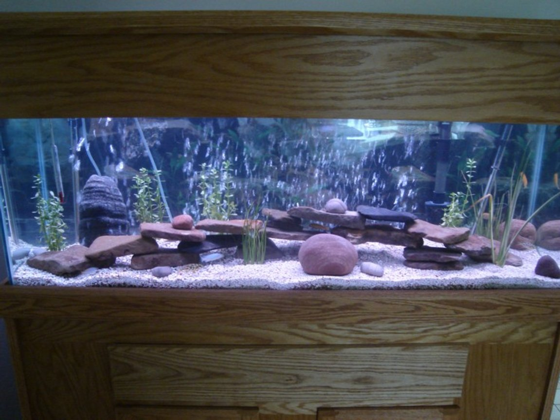 45 gallons freshwater fish tank (mostly fish and non-living decorations) - 45 gallon cicclid tank