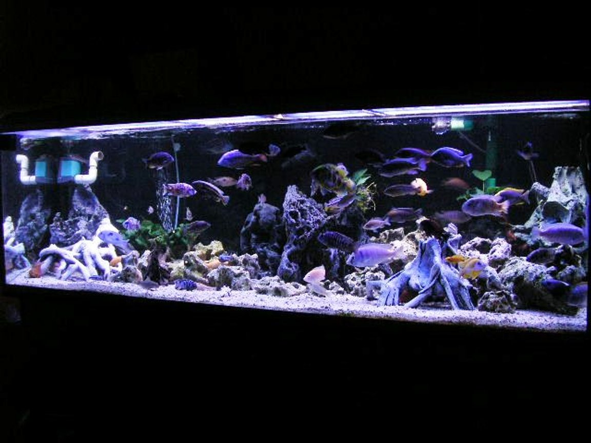 200 gallons freshwater fish tank (mostly fish and non-living decorations) - 200 gal Mixed Rift lake tank.