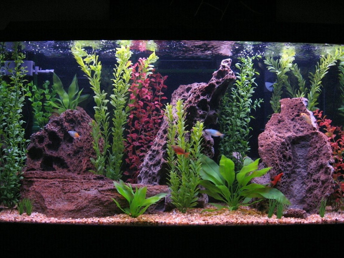 80 gallons freshwater fish tank (mostly fish and non-living decorations) - The tank is a 80 gallon Visia Aquarium. Filtration is provided by 2 Penguin Bio Wheel 350's and 1 Eheim canister 2215. The heater is a 250w Visi-therm Stealth heater. I do 50% water change and vacuum the gravel once a week.