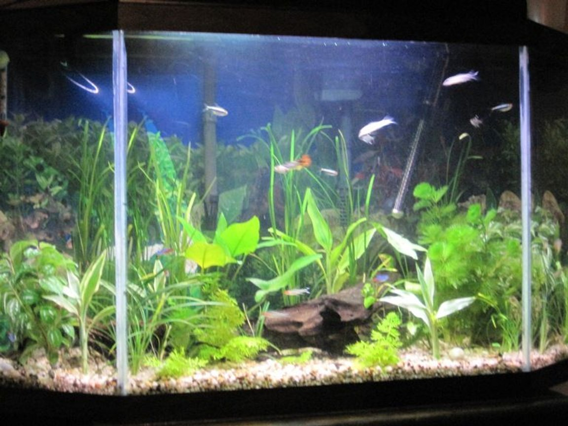 34 gallons freshwater fish tank (mostly fish and non-living decorations) - update all live plants