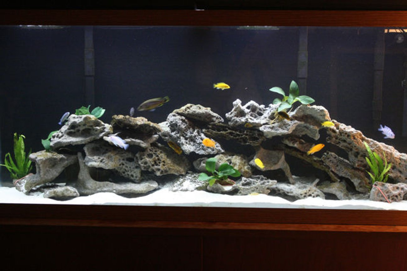 55 gallons freshwater fish tank (mostly fish and non-living decorations) - 55 gallon planted Mbuna tank