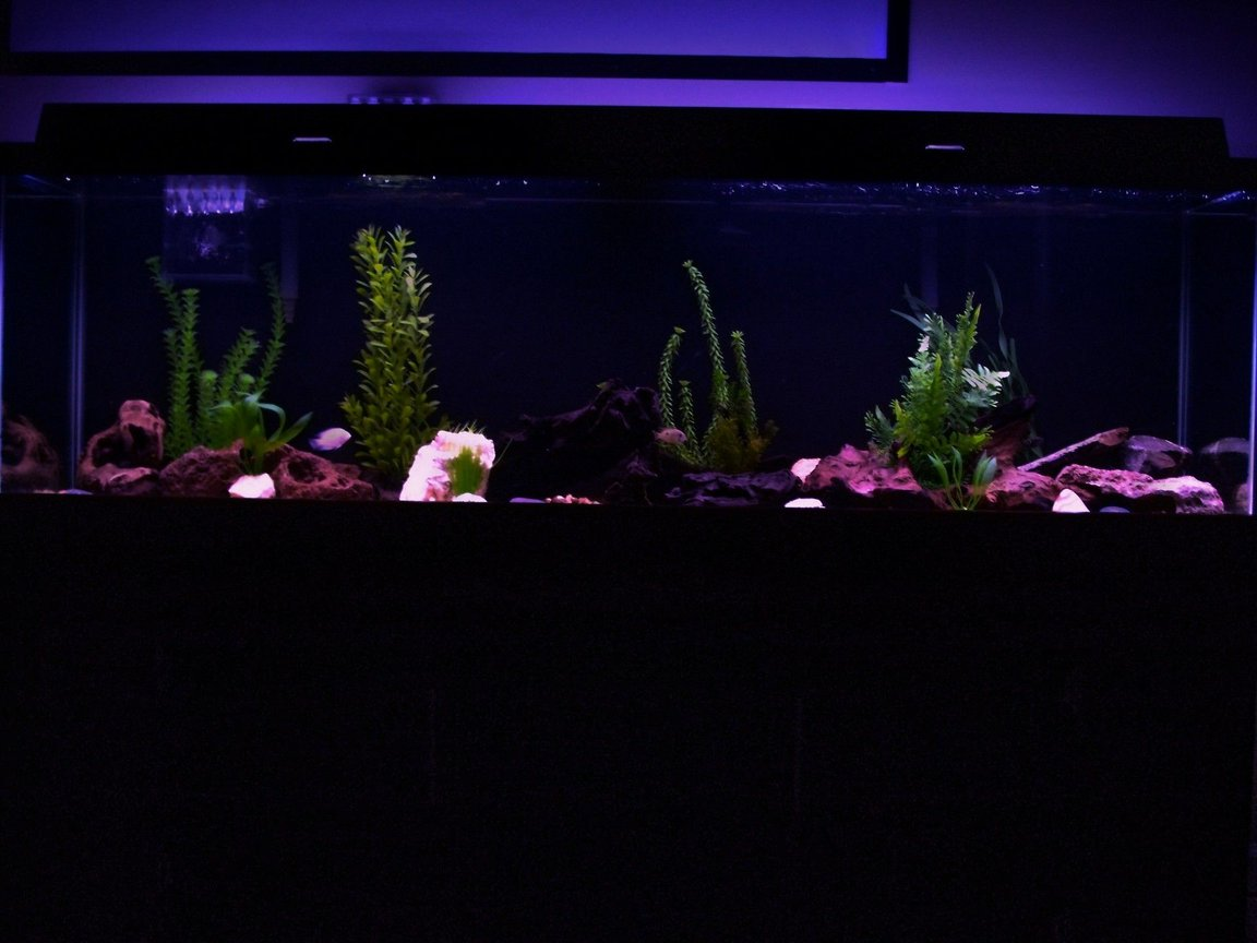 125 gallons freshwater fish tank (mostly fish and non-living decorations) - My 125 at night