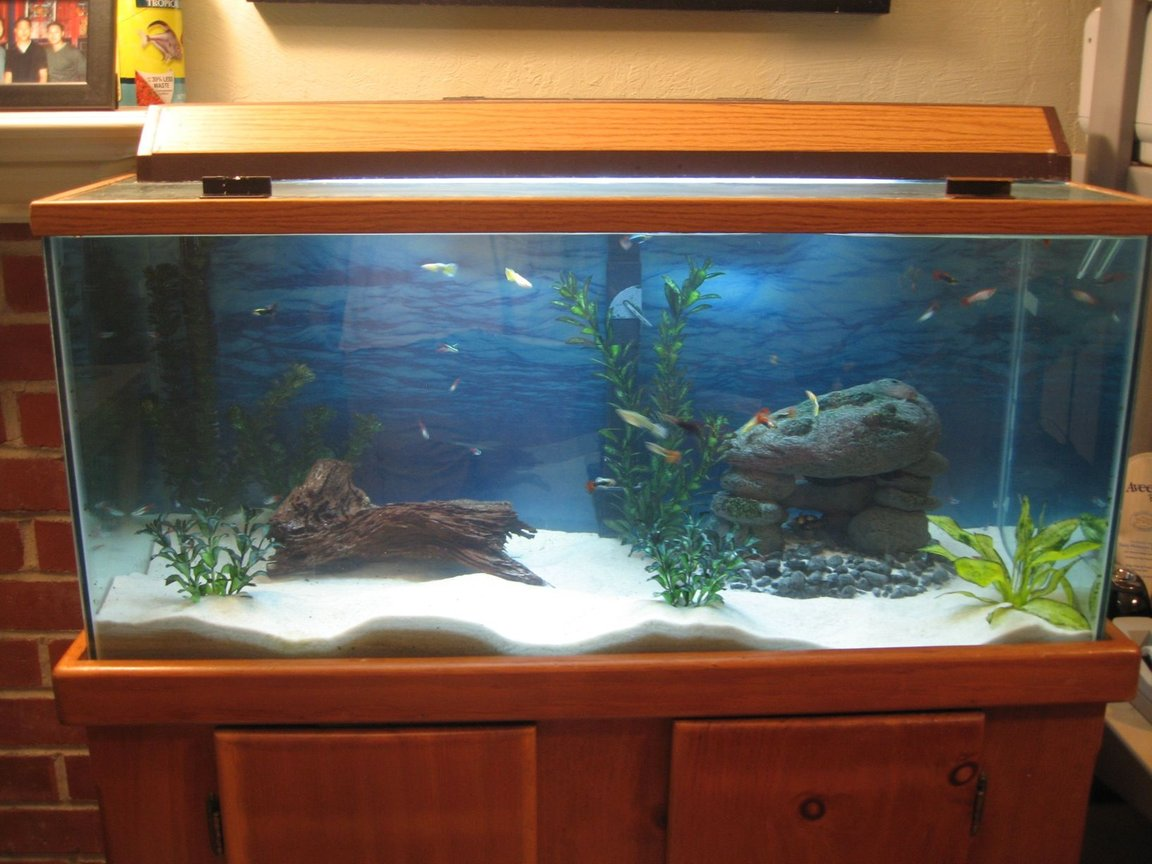 40 gallons freshwater fish tank (mostly fish and non-living decorations) - Jin's 40 gallon freshwater tank