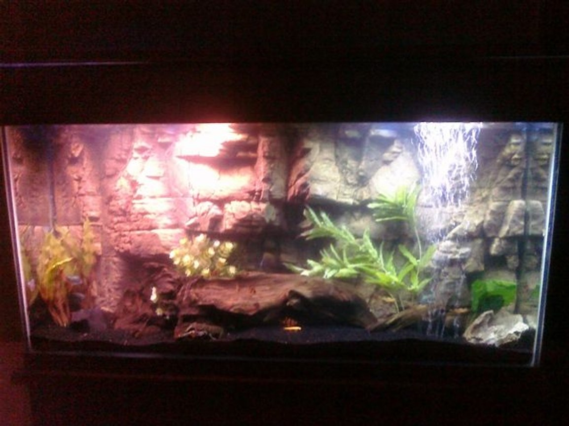 90 gallons freshwater fish tank (mostly fish and non-living decorations) - My tank after restoration and cycling. Sorry for crappy cellphone pic...