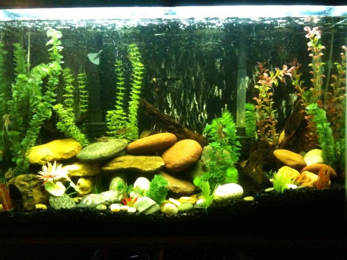 45 gallons freshwater fish tank (mostly fish and non-living decorations) - This is my tank!