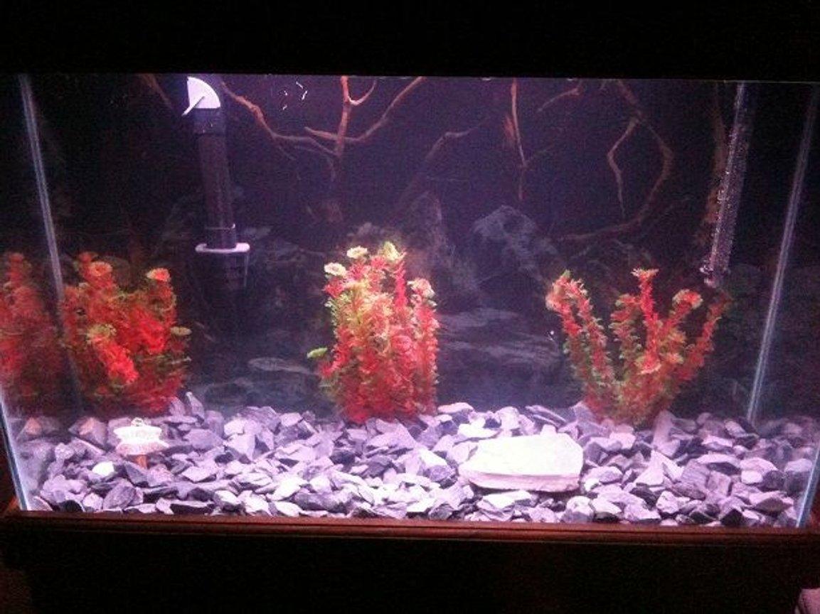 60 gallons freshwater fish tank (mostly fish and non-living decorations) - Main fish tank