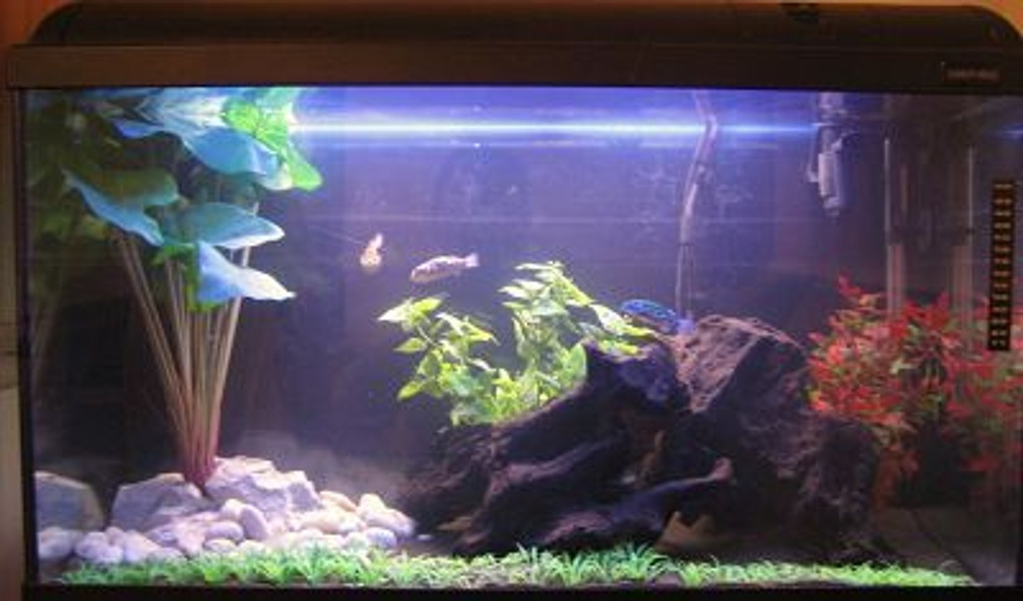 33 gallons freshwater fish tank (mostly fish and non-living decorations) - Brackish system. Only been running since the end of december. Thanks for looking and please rate.