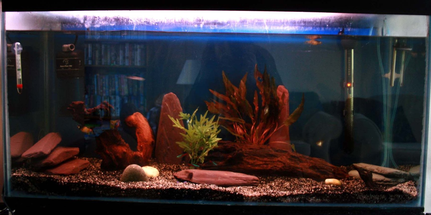 33 gallons freshwater fish tank (mostly fish and non-living decorations) - Rob's 125 litre tank