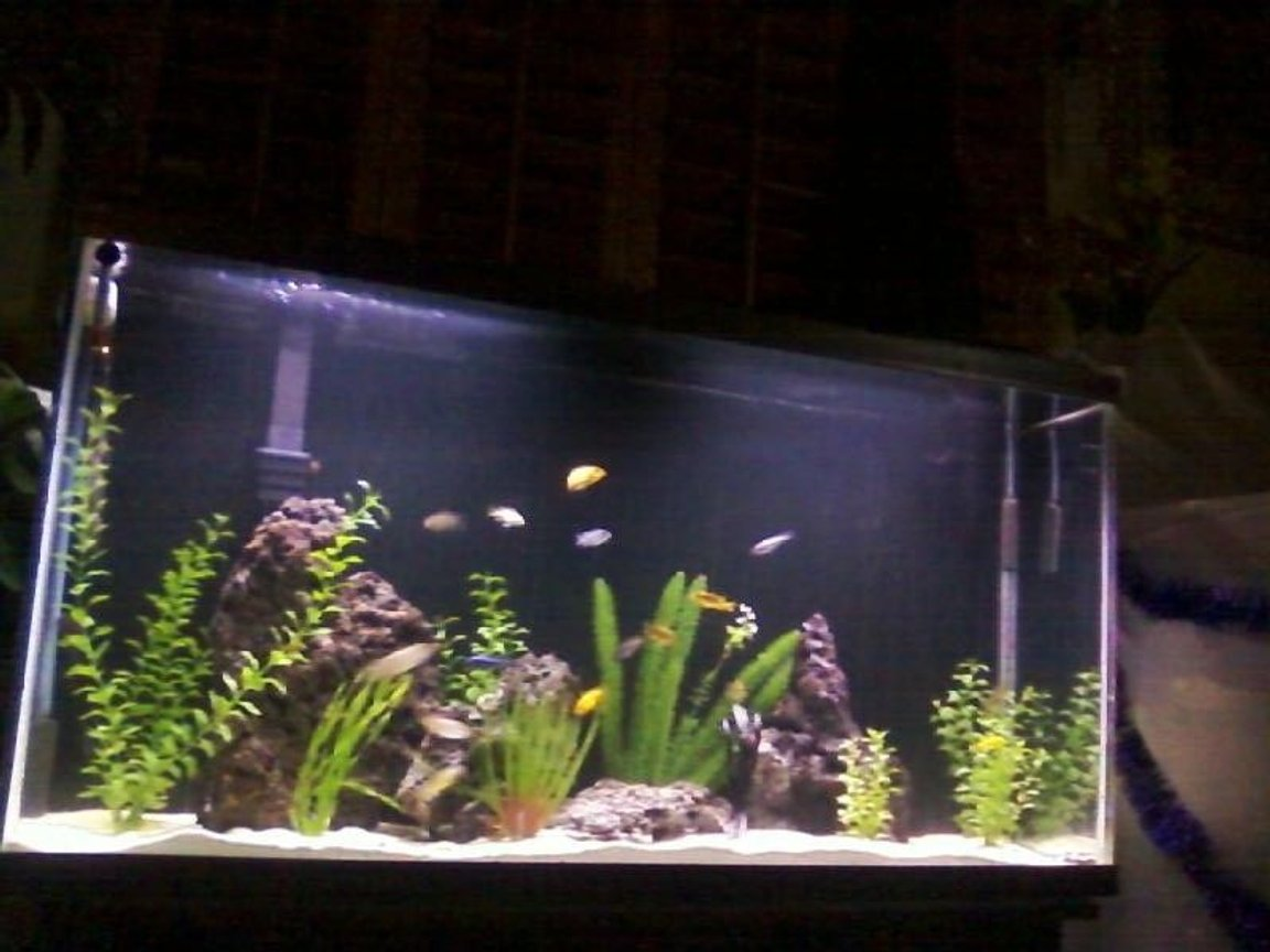 60 gallons freshwater fish tank (mostly fish and non-living decorations) - aquamania