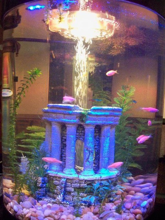 70 gallons freshwater fish tank (mostly fish and non-living decorations) - 9 gallon biube. Comment please?