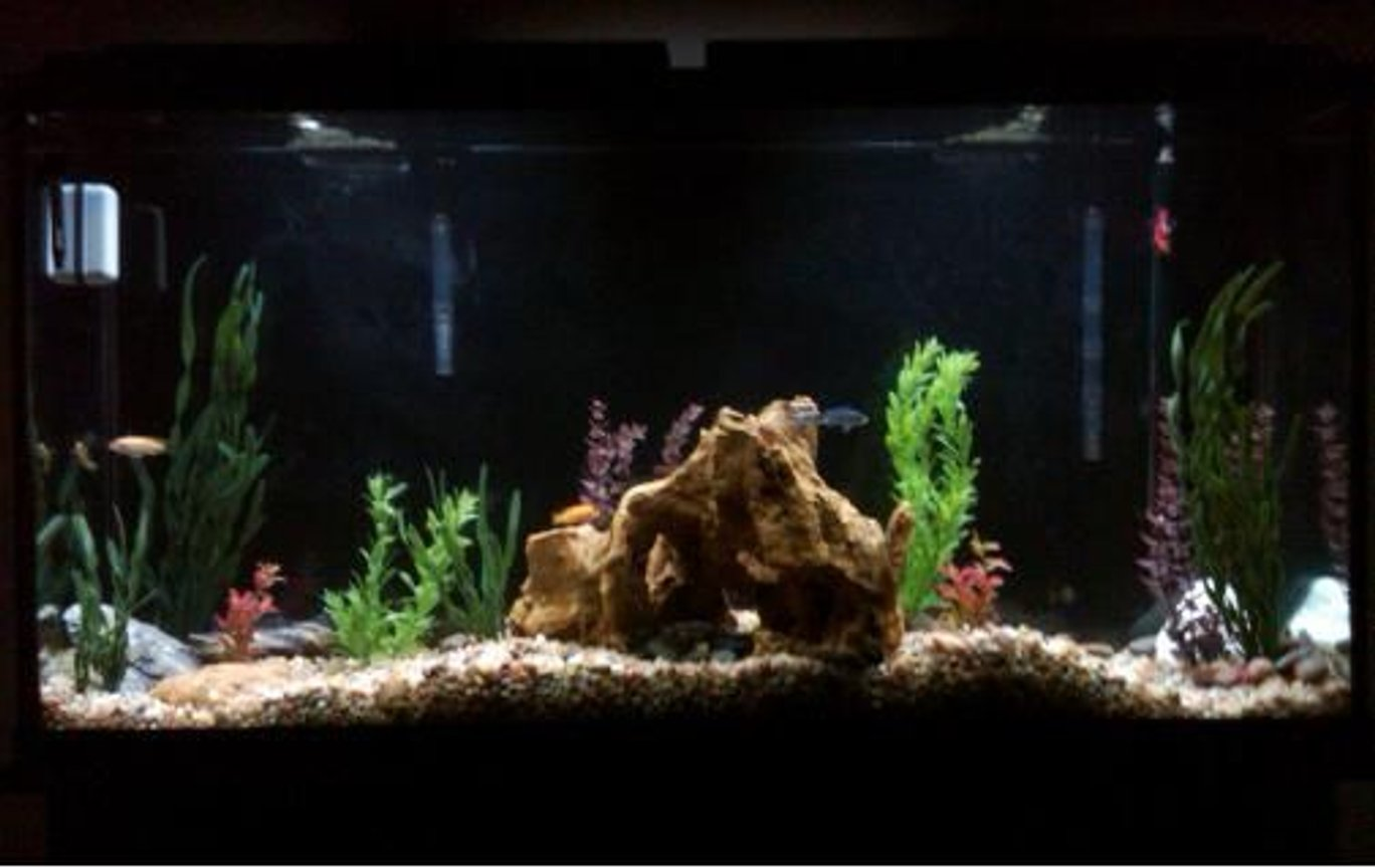 60 gallons freshwater fish tank (mostly fish and non-living decorations) -