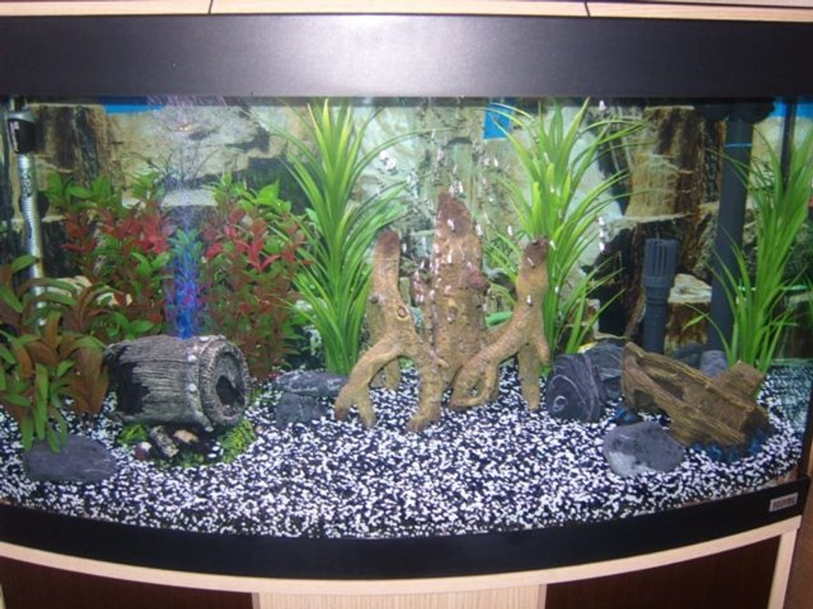39 gallons freshwater fish tank (mostly fish and non-living decorations) - 180l Community Tank