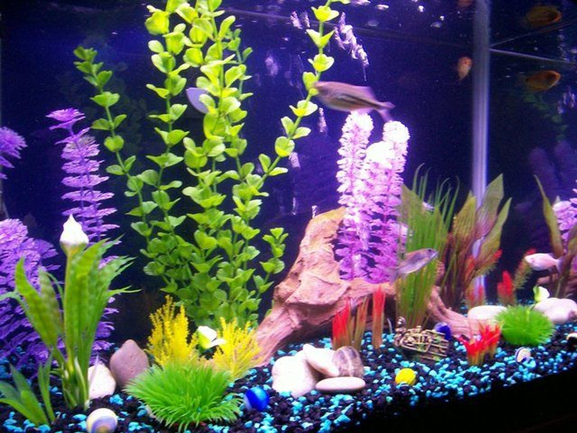 20 gallons freshwater fish tank (mostly fish and non-living decorations) - Here is a better photo it shows the colors better. thanks for looking!Your comments are welcome!!!!!
