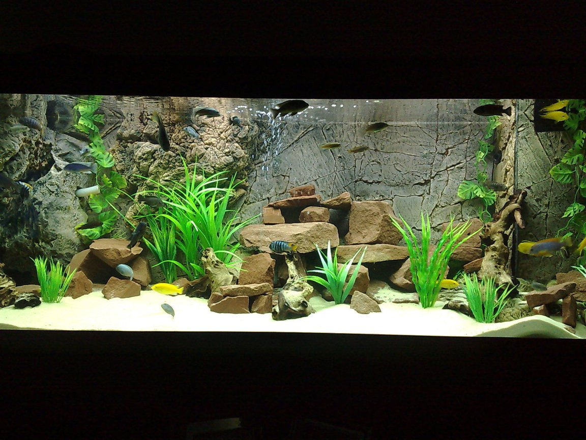 105 gallons freshwater fish tank (mostly fish and non-living decorations) - 400ltr Malawi Tank.