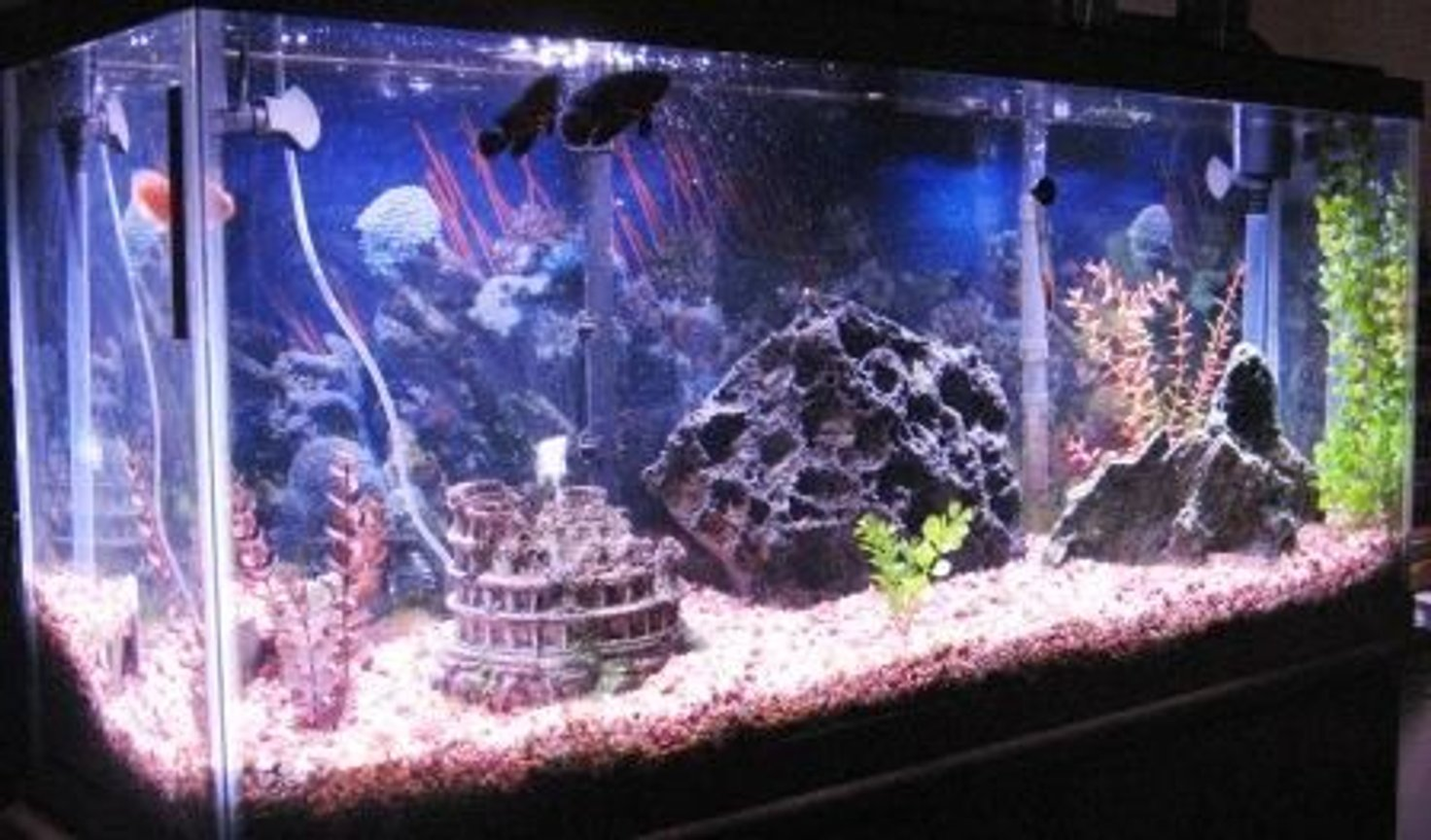 55 gallons freshwater fish tank (mostly fish and non-living decorations) - Tank has undergravel filter with 2 Penguin 550 powerheads. One on each corner, also with a 60 gallon chemical filter that hangs on the back of the tank. 200 watt stealth heater.