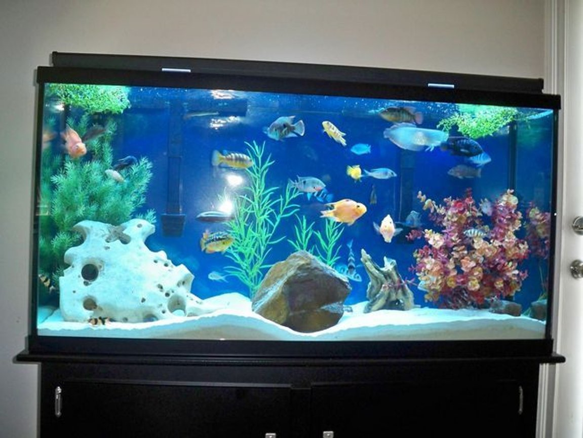 175 gallons freshwater fish tank (mostly fish and non-living decorations) - the old 60 gallon Feb 10, 2009 tank is for sale $250 obo. dallas/ft worth, locals only.