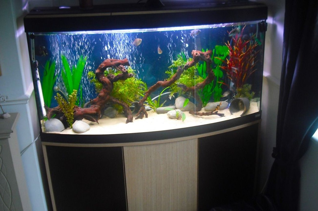 120 gallons freshwater fish tank (mostly fish and non-living decorations) - Just a random shot, will put up some better ones.