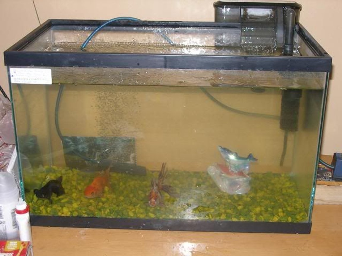 10 gallons freshwater fish tank (mostly fish and non-living decorations) - my beuytiful tank with my 3 favrite guys aahaha.