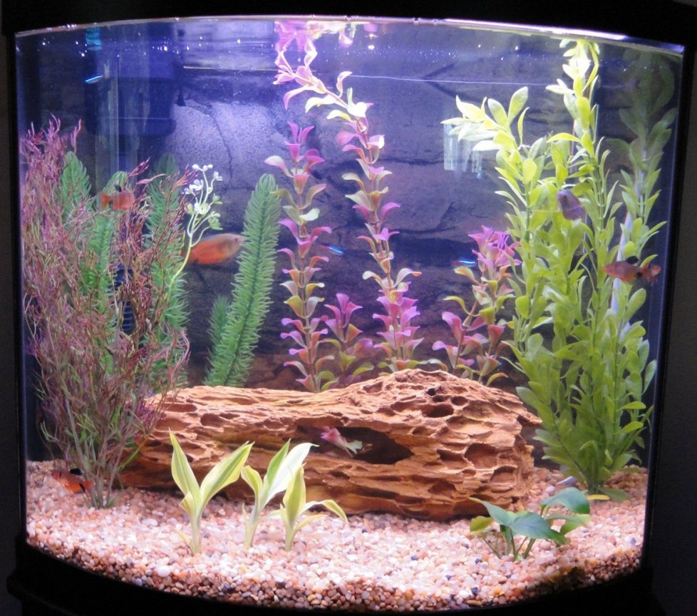 16 gallons freshwater fish tank (mostly fish and non-living decorations) - 16 gallon bow (April 01, 2010)