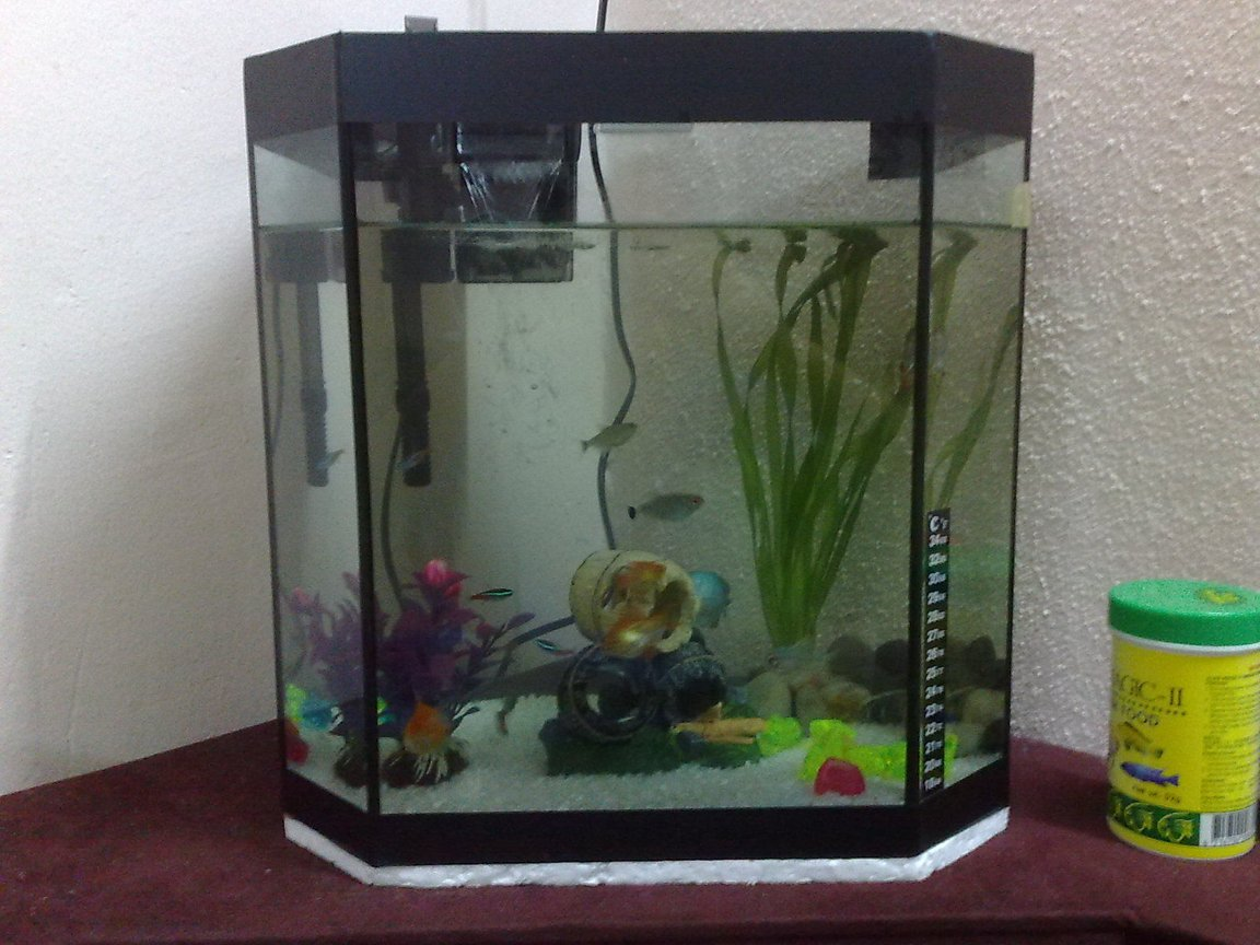 5 gallons freshwater fish tank (mostly fish and non-living decorations) - Hi guys..hope you can give comments about my tank..sorry if the pic a bit far! i know my tank just a simple 1 but hope you guys give a fair rate..