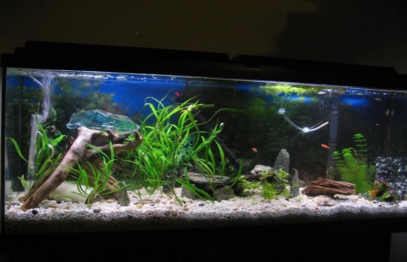 55 gallons freshwater fish tank (mostly fish and non-living decorations) - updated with all 25 fish