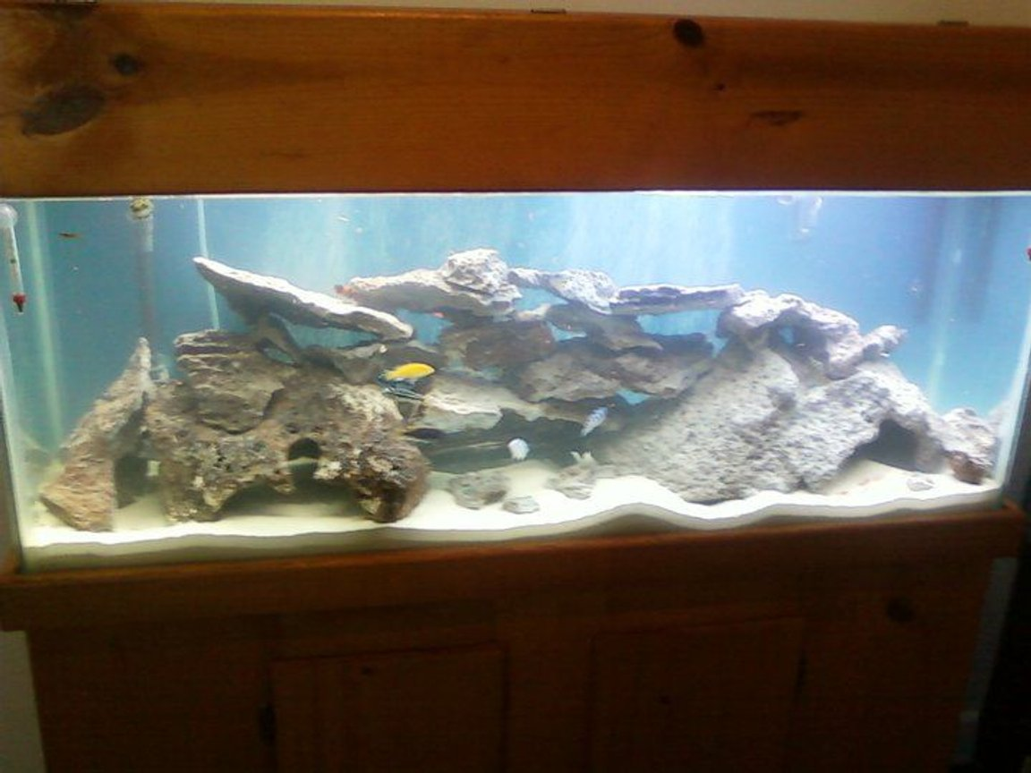 55 gallons freshwater fish tank (mostly fish and non-living decorations) - Fish Tank
