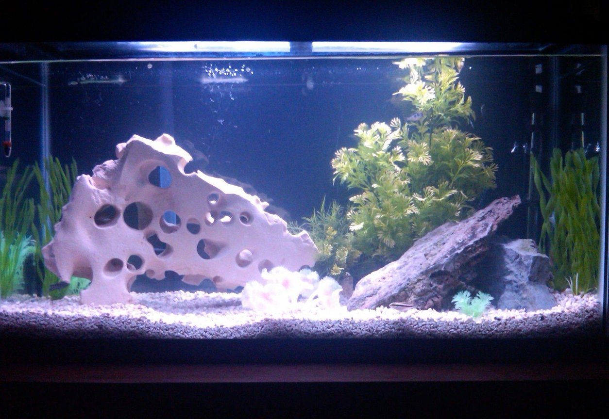38 gallons freshwater fish tank (mostly fish and non-living decorations) - my 38 gallon freshwater tank