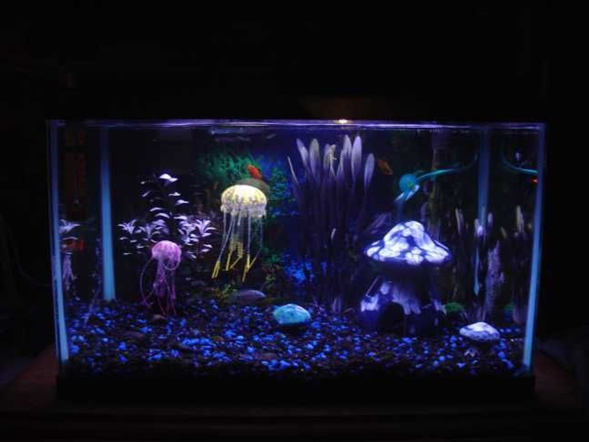 10 gallons freshwater fish tank (mostly fish and non-living decorations) - 10 gallon aquarium with fake jellyfish