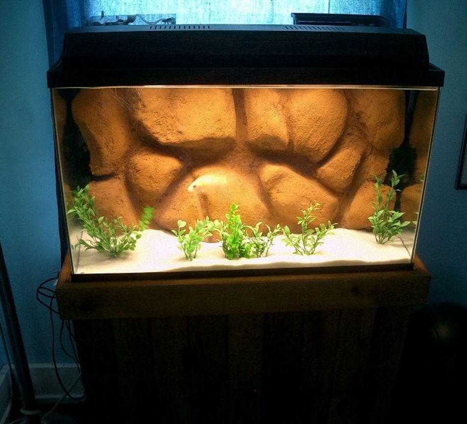 55 gallons freshwater fish tank (mostly fish and non-living decorations) - New DIY 3d background