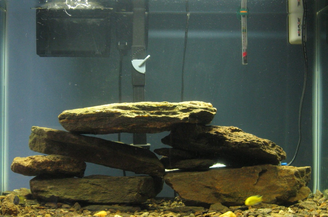 55 gallons freshwater fish tank (mostly fish and non-living decorations) - my cichlid tank