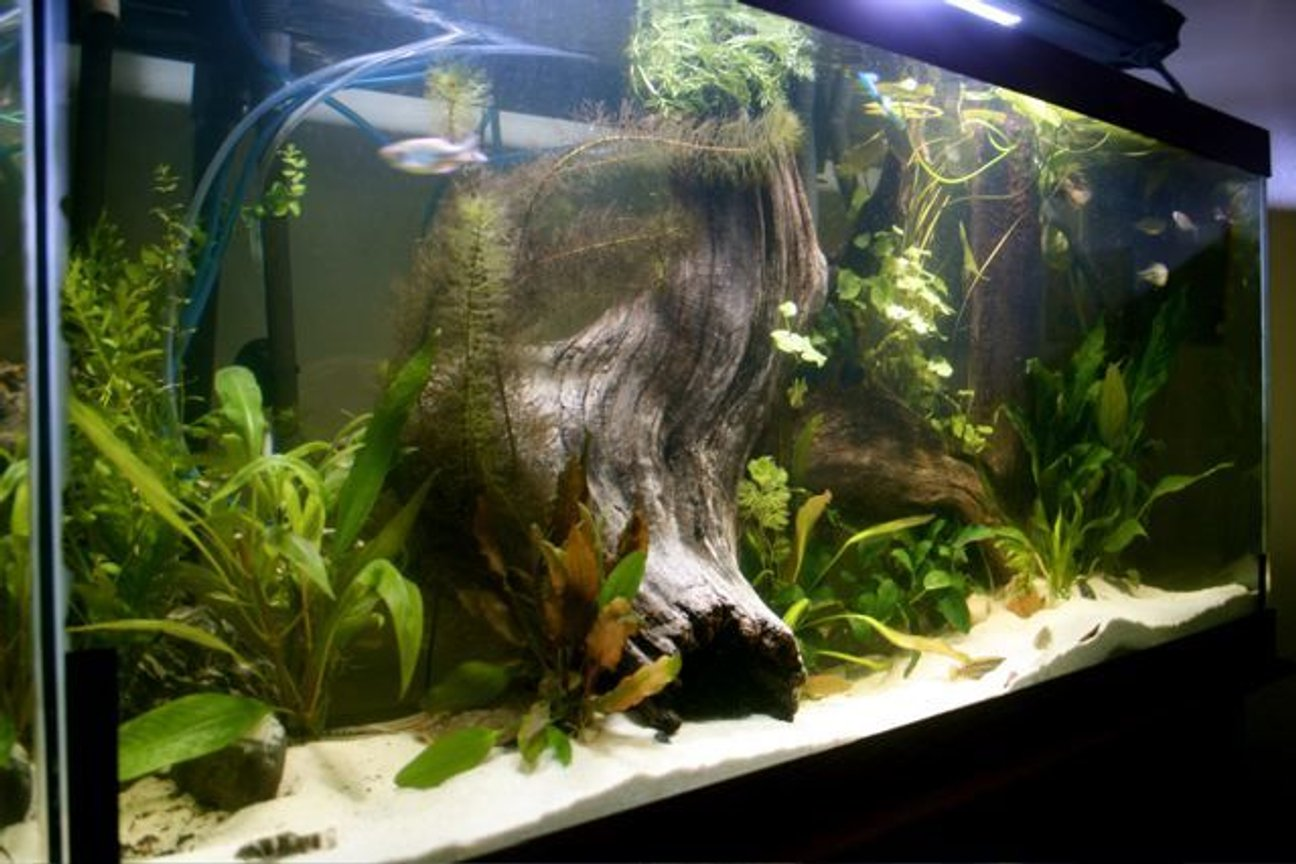 75 gallons freshwater fish tank (mostly fish and non-living decorations) - 80G