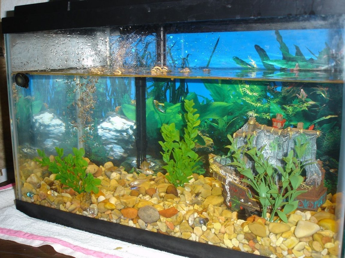 10 gallons freshwater fish tank (mostly fish and non-living decorations) - This is my snail tank.