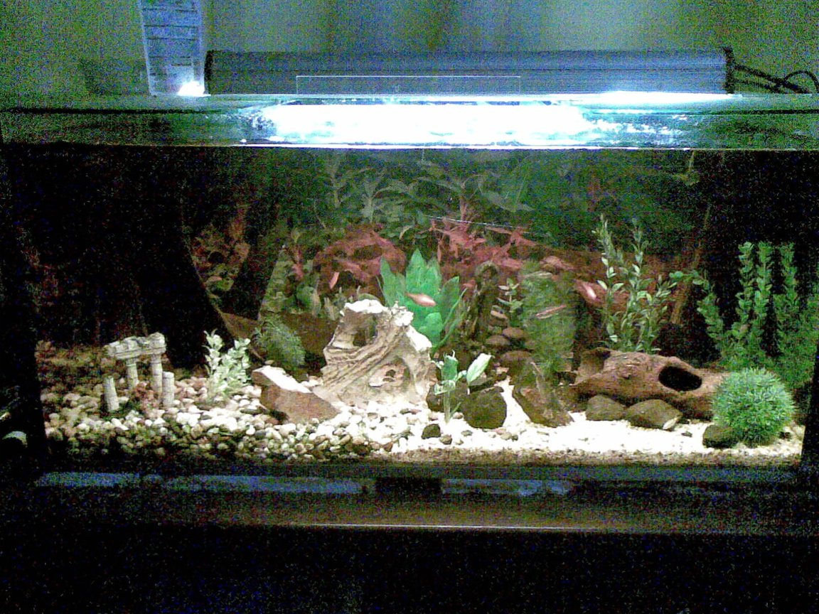 55 gallons freshwater fish tank (mostly fish and non-living decorations) - My tetra tank