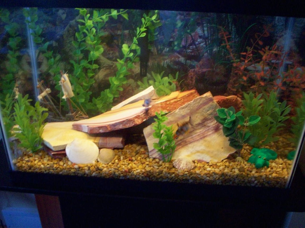 20 gallons freshwater fish tank (mostly fish and non-living decorations) - my 20 gallon fish tank.