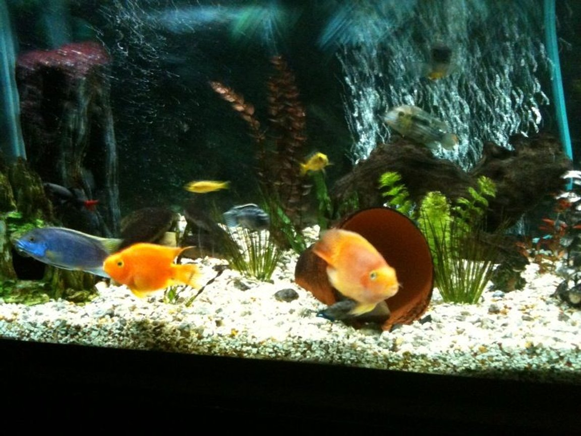 65 gallons freshwater fish tank (mostly fish and non-living decorations) - feeding time