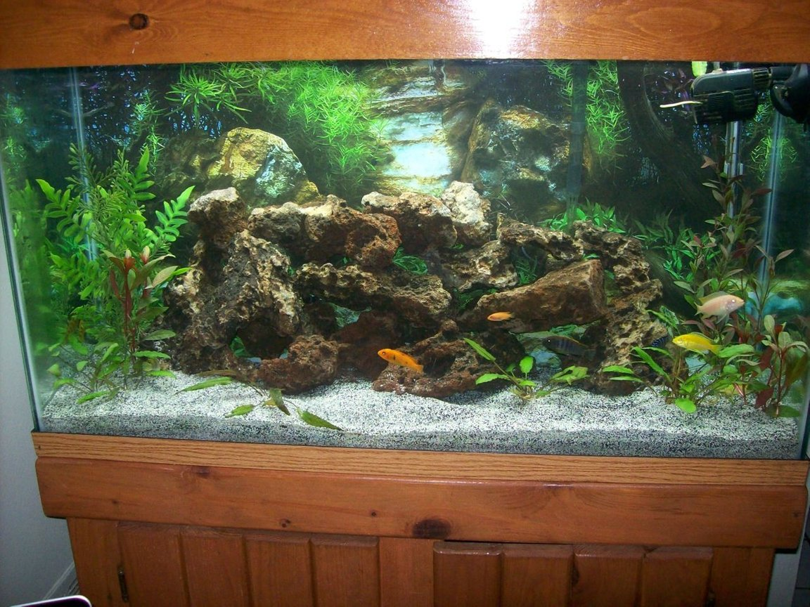 38 gallons freshwater fish tank (mostly fish and non-living decorations) - 38 gallon African Cichlid Tank