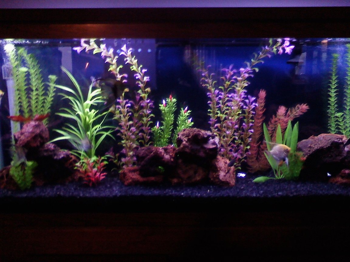 14 gallons freshwater fish tank (mostly fish and non-living decorations) - Our 55 gallon.