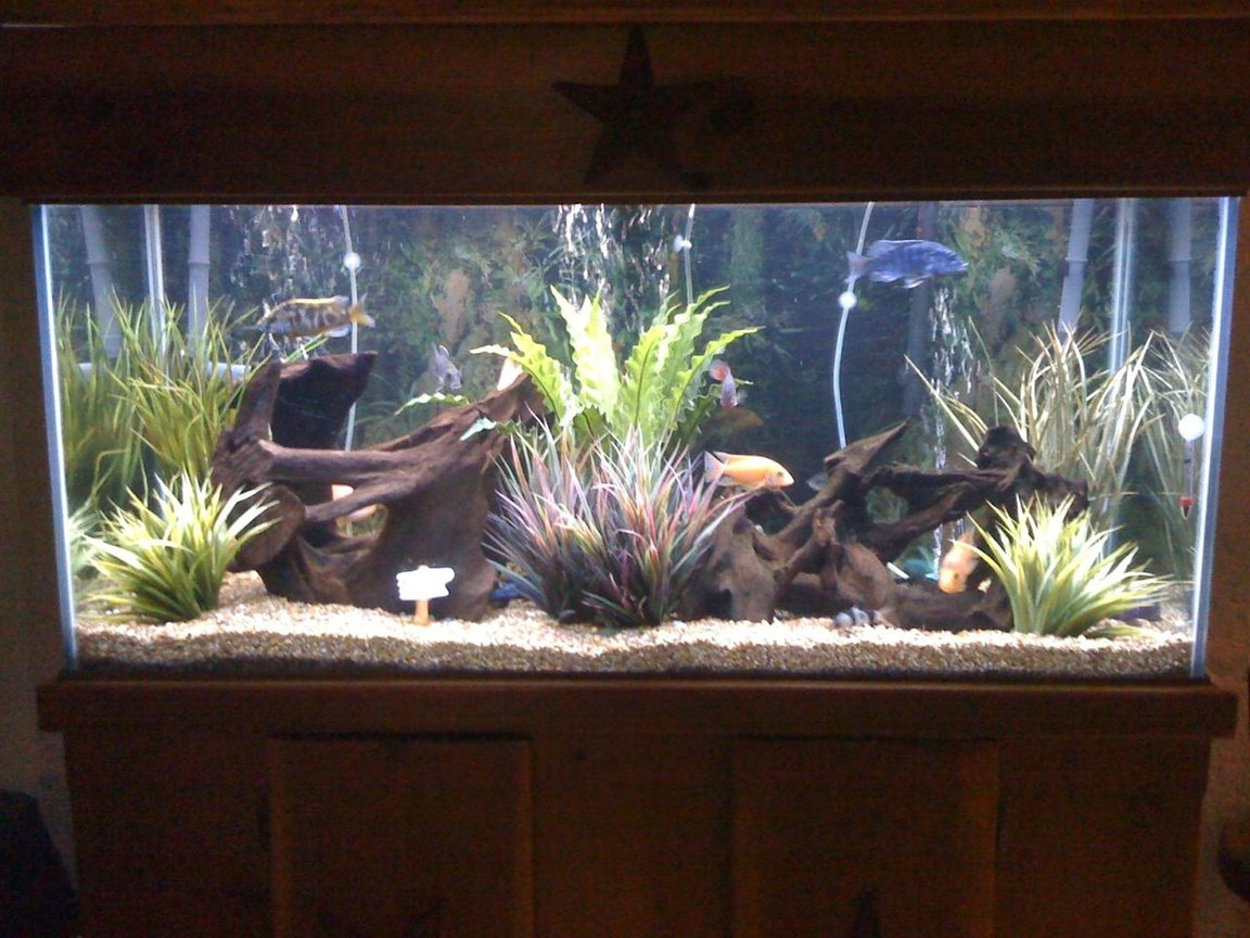75 gallons freshwater fish tank (mostly fish and non-living decorations) - Bad pic take by iphone. I will update it soon.