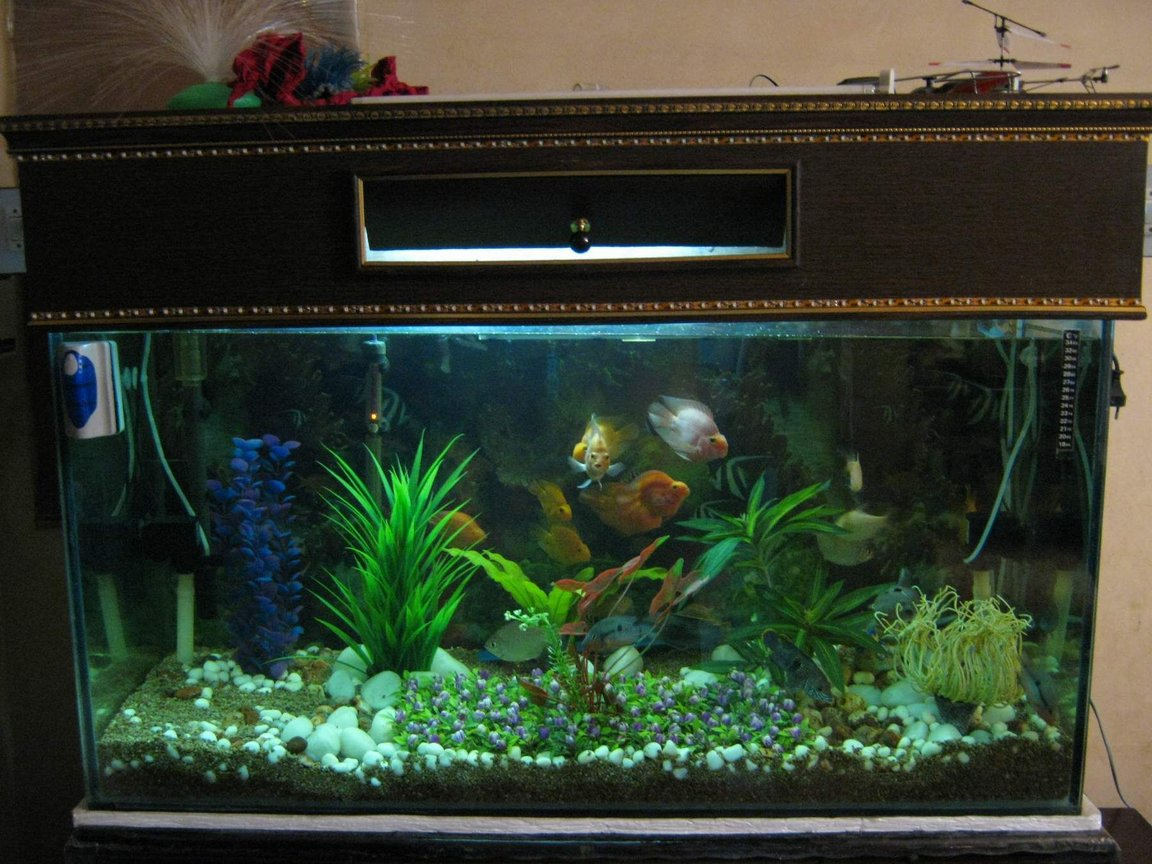 90 gallons freshwater fish tank (mostly fish and non-living decorations) - t1