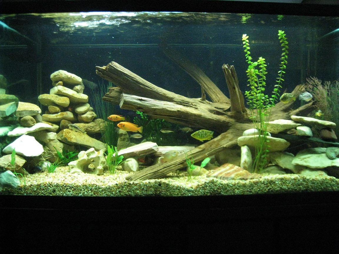 120 gallons freshwater fish tank (mostly fish and non-living decorations)