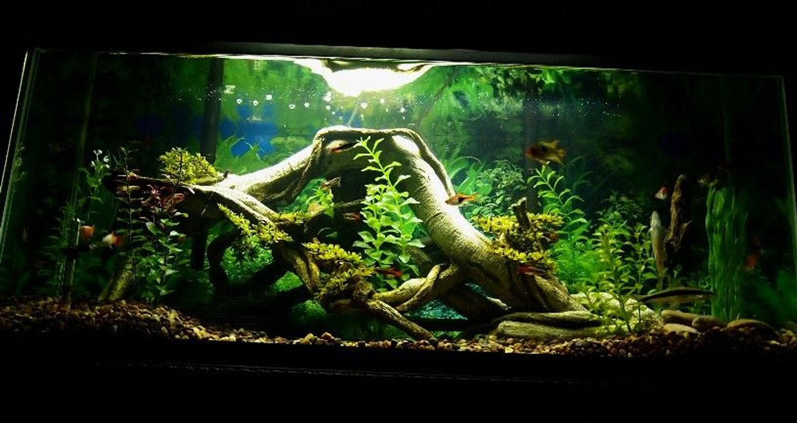 30 gallons freshwater fish tank (mostly fish and non-living decorations) - 30 gallon long.... non-living decor